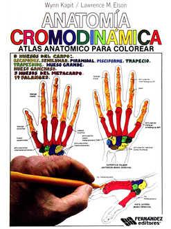Resultado de imagen de anatomia cromodinamica
